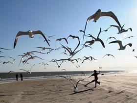 美麗的海鷗圖片