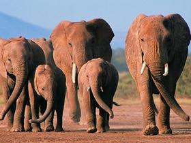 溫馨大象家庭圖片