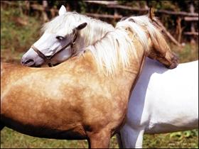 可爱的马图片