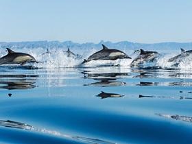 海之精灵-海豚图片
