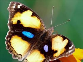 那格浦尔的蝴蝶图片