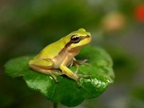 可爱的青蛙小雨蛙