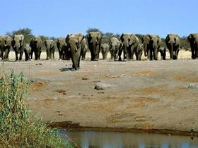 温顺的大象