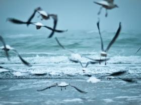 海浪與海鷗圖片