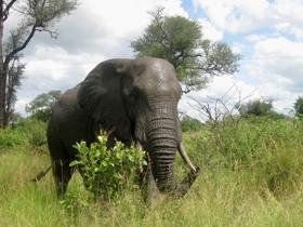 近距離看大象