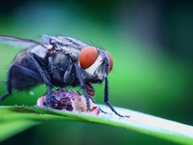 微距苍蝇图片