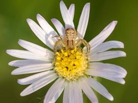 花朵上的蜘蛛圖片