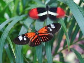 漂亮的蝴蝶图片