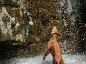 戏水的狗狗图片