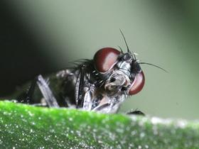 蒼蠅的微距圖片