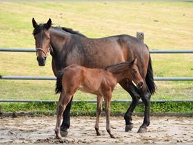 母马和马驹图片