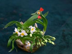 水仙花盆景圖片