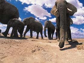 憨厚的大象图片