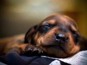 熟睡的狗狗图片