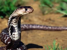 棕色花纹的蛇图片