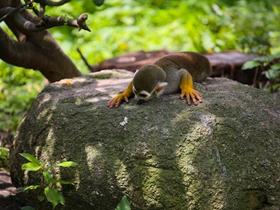 顽皮的松鼠猴