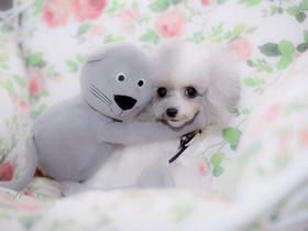 宠物狗摄影
