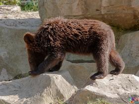 动物园拍黑熊