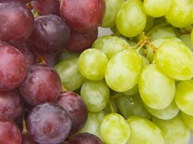 葡萄庄园图片