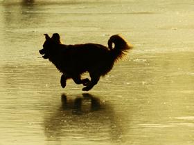 狗狗的冰嬉