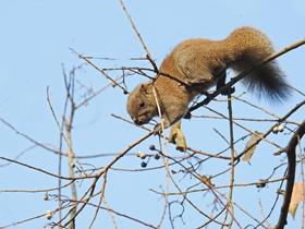 高树上的松鼠