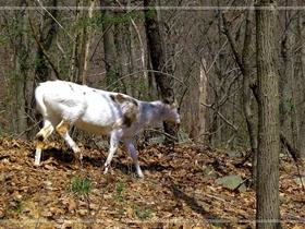 巧遇野生羚羊