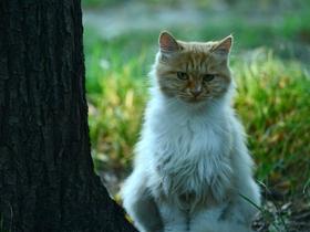 公园里的猫咪