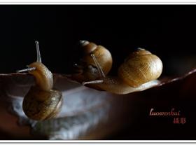 小蜗牛大形象