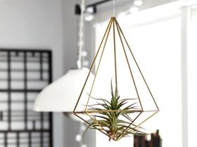創意空氣鐵蘭鳳梨花器