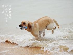 海边的狗狗
