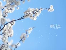 樱花盛开的图片