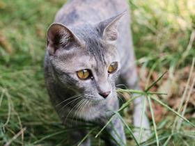 草丛里的小花猫