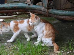 小猫咪的图片