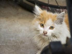 北京流浪猫日记