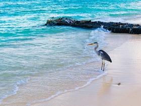 沙滩寻鱼的鸟