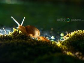 蜗牛的微世界