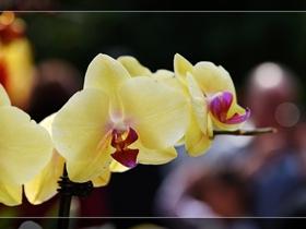 缤纷多彩的兰花图片