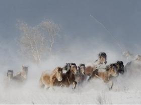 林海雪原中的马