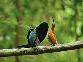 鸟类的美丽风姿
