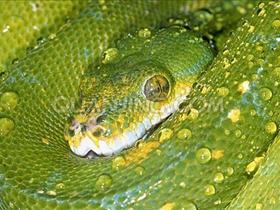 世界各种蟒蛇图片
