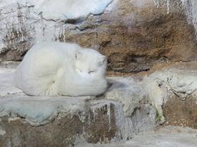 高清纯白色北极狐狸图片