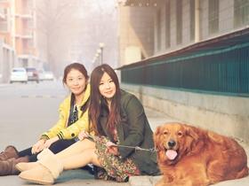 美女遛金毛犬图片