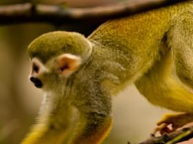 可愛的松鼠猴