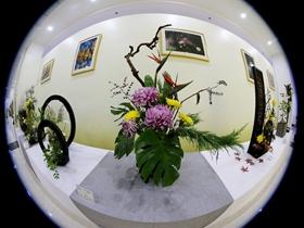 世园会菊花展