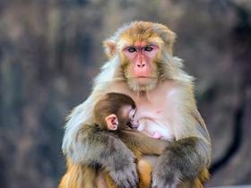 猴島上的猴子們