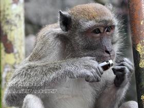 原生态的野生猴