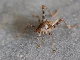 近距觀察蟋蟀