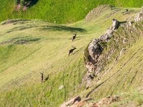 索尔巴斯陶的野生马鹿