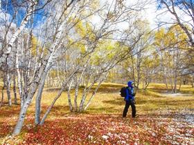 迷失在坝上金秋中的白桦林