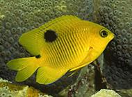 海龟海星海底世界的生物图片